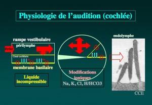 Schéma: Physiologie de l'audition