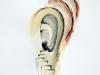 Etude d'oreille 6