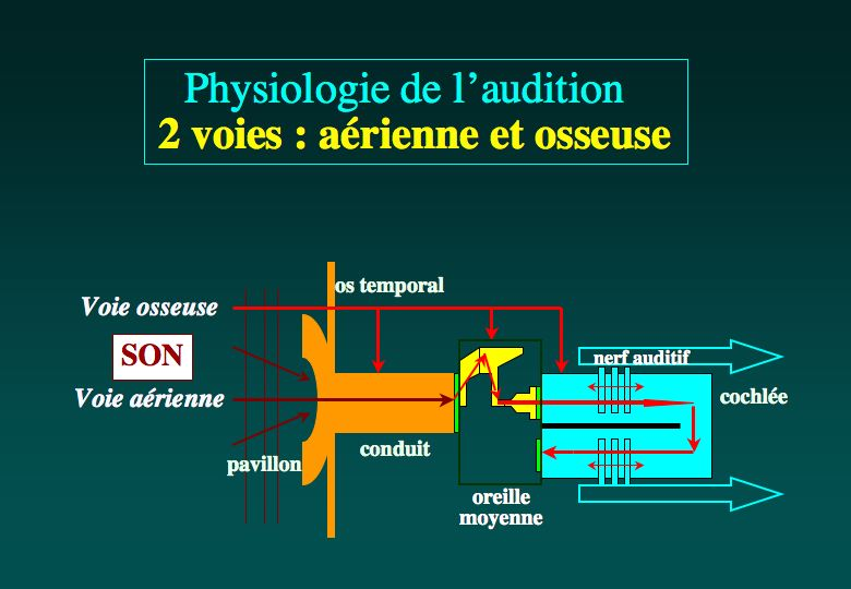 Physiologie De L Audition Otologie Dr Albert Mudry