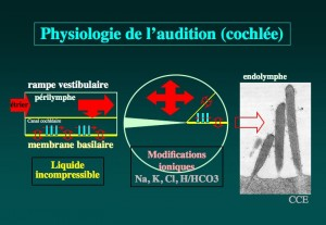 Schéma: Physiologie de l'audition